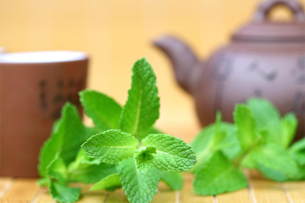 The Health Benefits of Mint Tea