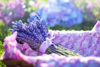 How to Dry Lavender in a Few Simple Steps